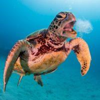 2020-07-27 Morgenexpress: Letzte Chance für das Great Barrier Reef