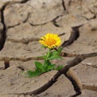 Think positive! – Positives an Corona