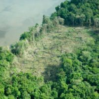 Jahresrückblick 28. April & Auswirkungen von Corona auf den Regenwald