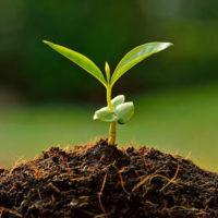 Schon gewusst? – Welche Pflanze wächst am schnellsten?