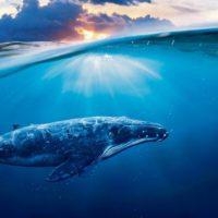 Wale – Rettet die Welt!