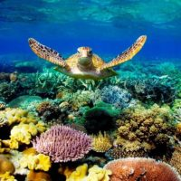 Make the Great Barrier Reef great again