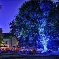 2016-06-17 Vöslau AKTIV: Schlossparklounge – Eva Dietl